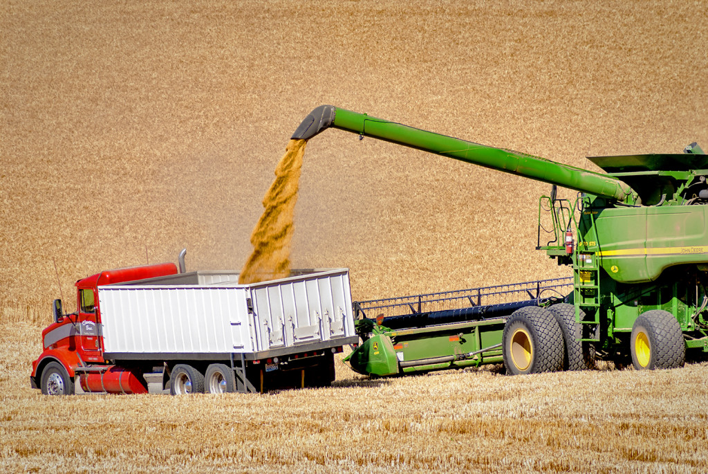 Combine_unloads_grain_-_Wheat_harvesting_in_Eastern_Washington_near_the_town_of_Steptoe